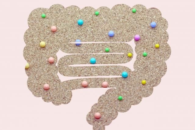 ビフィズス菌と腸内フローラ