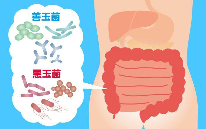 腸内フローラに存在する菌