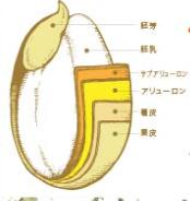 米ぬか解説画像